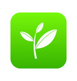 tea leaf sprout icon digital green vector image vector image