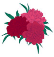 beautiful bouquet pink peonies with green vector image vector image