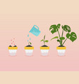 plant growing stages timeline infographic vector image