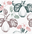 quince vintage background vector image vector image