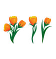 set blooming orange tulips with green leaves vector image vector image