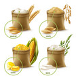 agricultural cereals set vector image vector image