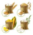 agricultural cereals set vector image