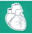 Anatomical heart human organ vector image