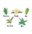engraved style herbs and spices collection for vector image
