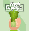 hand holding vegetable fresh organic chives vector image