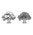 ink sketch of oak tree vector image