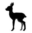 roe deer cub vector image vector image
