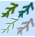 Set of four spruce pine branches isolated on a vector image