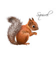 squirrel realistic vector image vector image