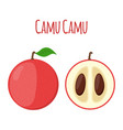superfood camu camu in flat style red camu berry vector image vector image