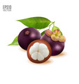 tropical fruit mangosteen with green vector image vector image
