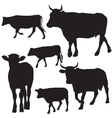 Cow set drawing with floral ornament decoration vector image vector image
