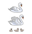 set swans - udult and babirds vector image vector image