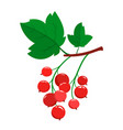 cartoon red currant berries with green leaves vector image vector image