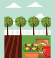 gardening apple trees flowers in pot potting soil vector image