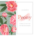 peony flowers watercolor frame beautiful decor vector image vector image