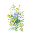 watercolor wildflowers and leaves on white vector image