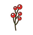 christmas branch and berrie decoration image vector image vector image