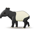 cartoon asian tapir isolated on white background vector image vector image