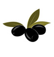 cartoon black pitted olives vector image