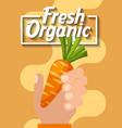 hand holding vegetable fresh organic carrot vector image
