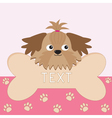 Little glamour tan Shih Tzu dogs head and big bone vector image vector image