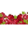 Pomegranate composition Isolated vector image vector image