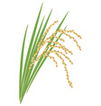 Spikelet of rice