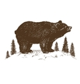 Brown bear symbol vector image