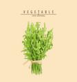 fresh green arugula vector image vector image