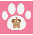 Little glamour tan Shih Tzu dog in the paw print C vector image vector image