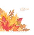 multicolor fallen leaves vector image