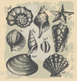 vintage drawing of sea shells vector image vector image