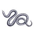 vintage snake engraving hand vector image