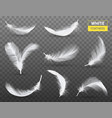 white feathers transparent set vector image vector image