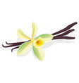 Vanilla pods vector | Price: 1 Credit (USD $1)