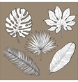 Set of tropical palm leaves sketch style vector image