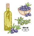 hand drawn black olive branch and olive oil in vector image