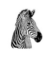 zebra hand drawn graphic on vector image