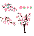 Cherry blossom tree branch with flowers vector image