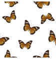 butterfly seamless on white background vector image vector image