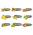 nuts logo set labels with macadamia pecan vector image