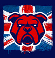 bulldog mascot on grunge british flag vector image vector image