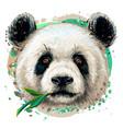 panda graphic color hand-drawn portrait vector image vector image