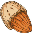 shelled almond vector image