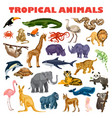 tropical animal concept background cartoon style vector image