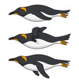 set color images a swimming penguin vector image vector image