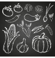 simple hand drawn doodle vegetables on black board vector image vector image