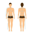 Man Body Front and Back for Measurement vector image vector image